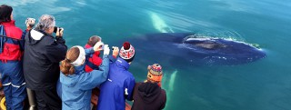 Whale Watching Thumbnail